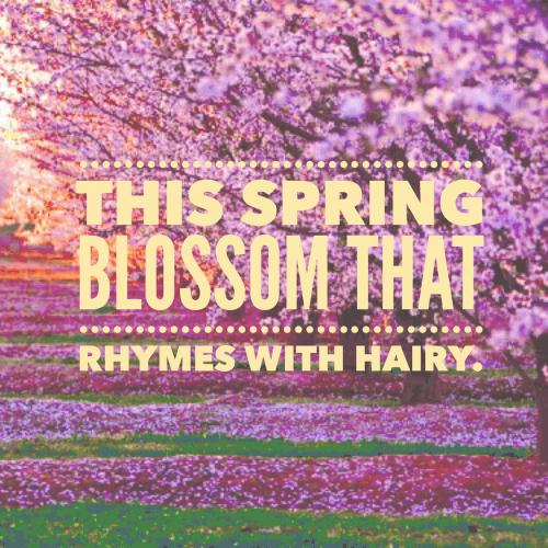 This spring blossom that rhymes with hairy.