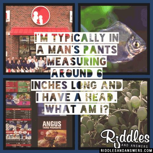 I'm typically in a man's pants measuring around 6 inches long and I have a head. What am I?