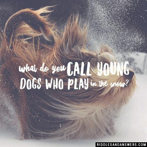 What do you call young dogs who play in the snow?