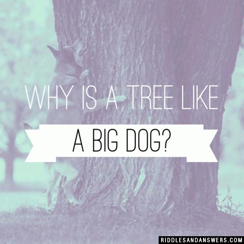 Why is a tree like a big dog?
