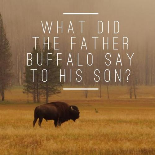 What did the father Buffalo say to his son?