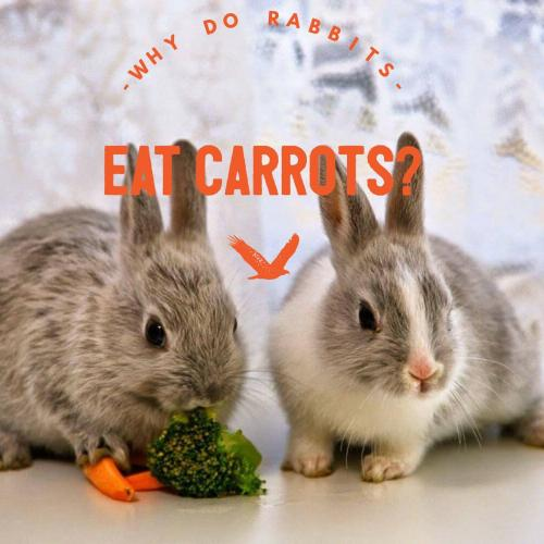 Why do rabbits eat carrots?