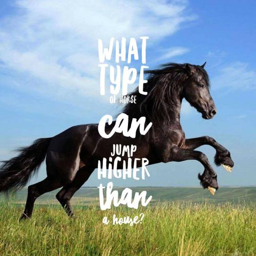 What type of horse can jump higher than a house?