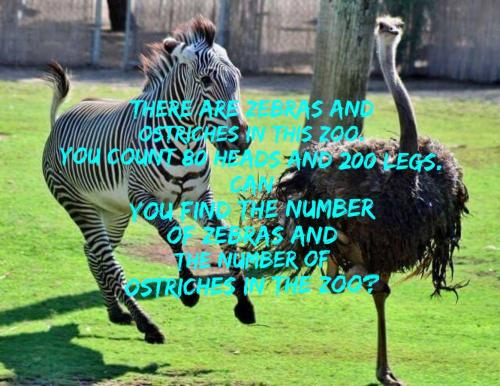 There are zebras and ostriches in this Zoo.