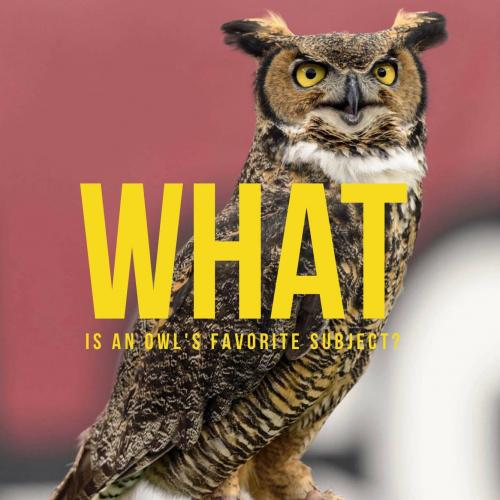 What is an owl's favorite subject?