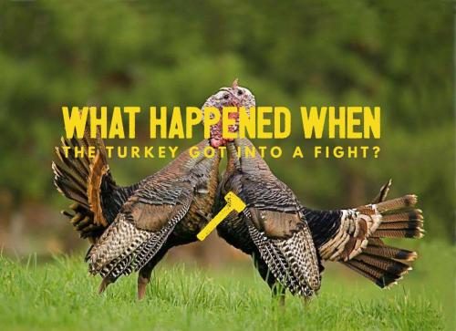 What happened when the turkey got into a fight?