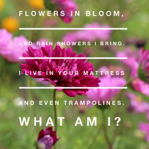 Flowers in bloom, and rain showers I bring. I live in your mattress and even trampolines. What am I?