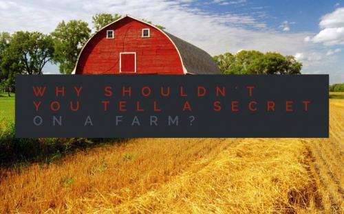 Why shouldn't you tell a secret on a farm?