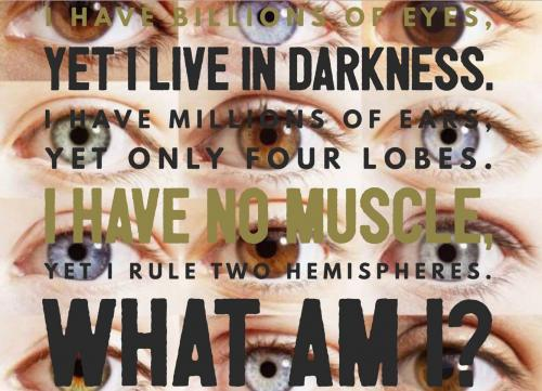 I have billions of eyes, yet I live in darkness. I have millions of ears, yet only four lobes. I have no muscle, yet I rule two hemispheres. What am I?