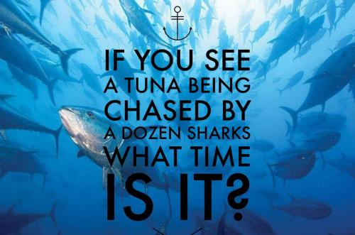 If you see a tuna being chased by a dozen sharks what time is it?