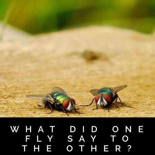 What did one fly say to the other?