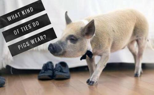 Pig Riddles