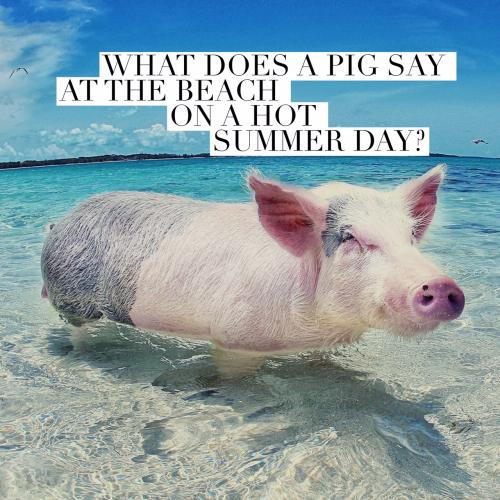 What does a pig say at the beach on a hot summer day?