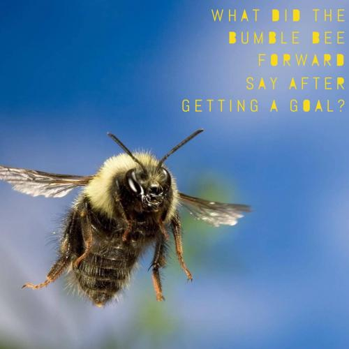 Bee Riddles