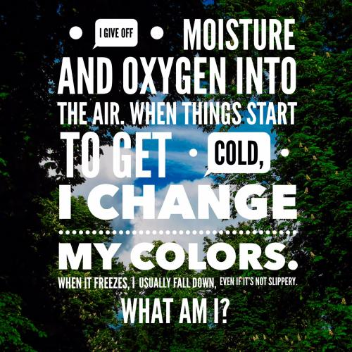 I give off moisture and oxygen into the air.  When things start to get cold, I change my colors. When it freezes, I usually fall down, even if it's not slippery. What am I?