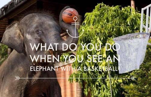 What do you do when you see an elephant with a basketball?