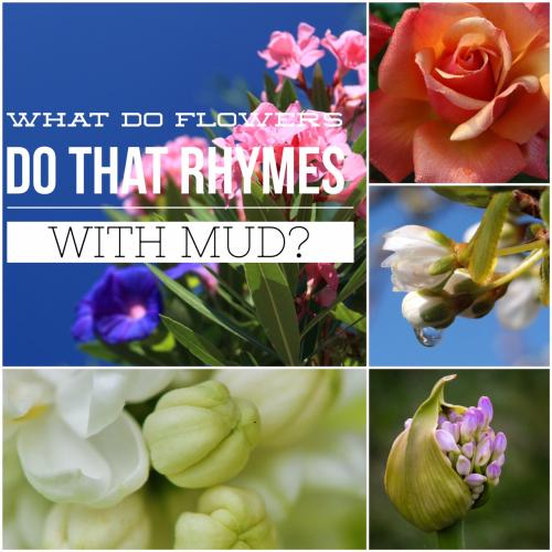 What do flowers do that rhymes with mud?
