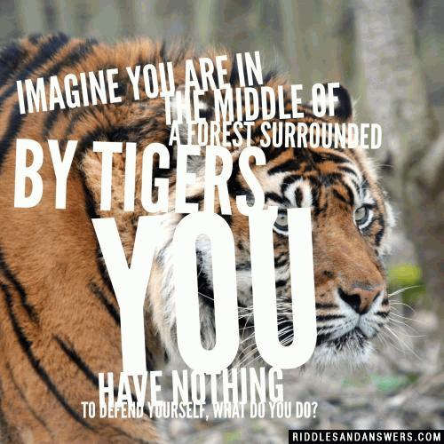 Imagine you are in the middle of a forest surrounded by tigers, you have nothing to defend yourself, what do you do?