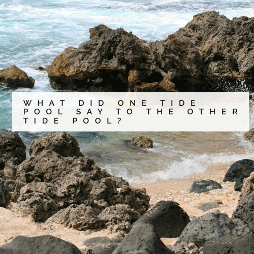 What did one tide pool say to the other tide pool?