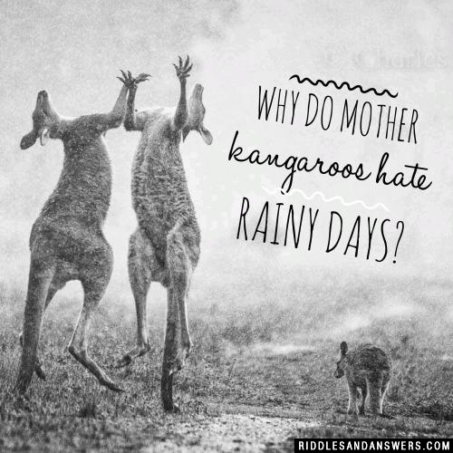 Why do mother kangaroos hate rainy days?