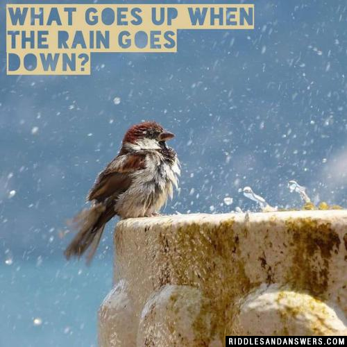 What goes up when the rain goes down?