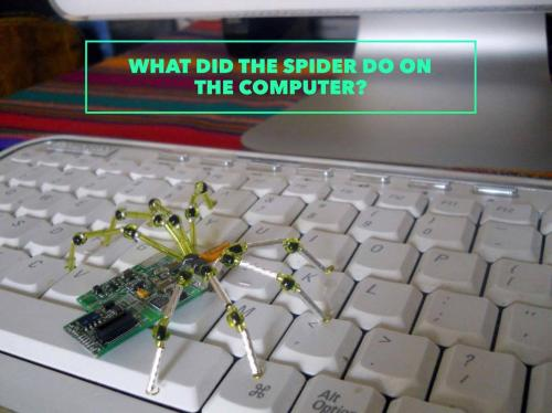 What did the spider do on the computer?