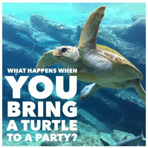 What happens when you bring a turtle to a party?