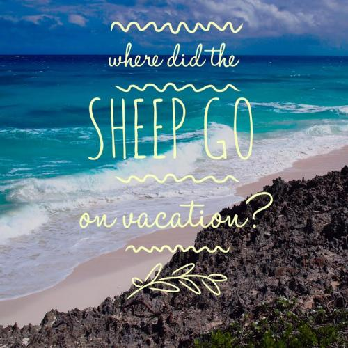 Where did the sheep go on vacation?