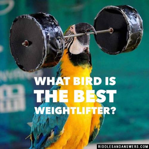 What bird is the best weightlifter?