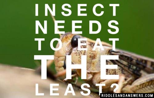 What insect needs to eat the least?