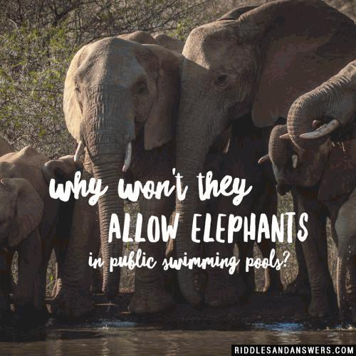 Why won't they allow elephants in public swimming pools?