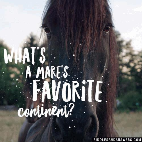 What's a mare's favorite continent?