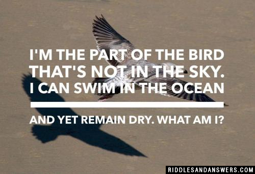 I'm the part of the bird that's not in the sky. I can swim in the ocean and yet remain dry. What am I?
