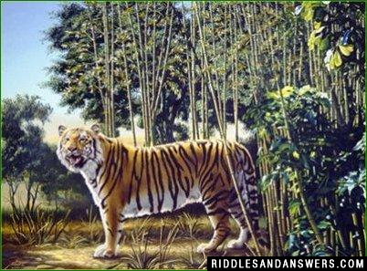 Try to locate the hidden tiger in the image given above?