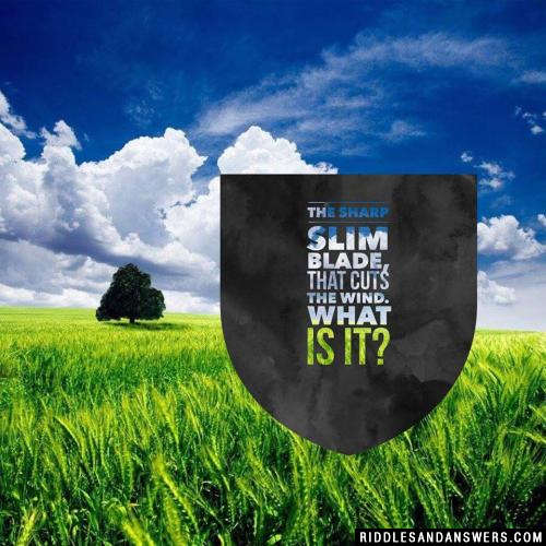 The sharp slim blade, that cuts the wind.