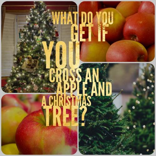 What do you get if you cross an apple and a Christmas tree?