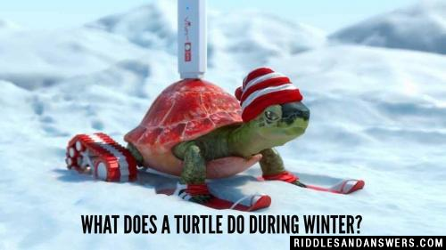 What does a turtle do during winter?