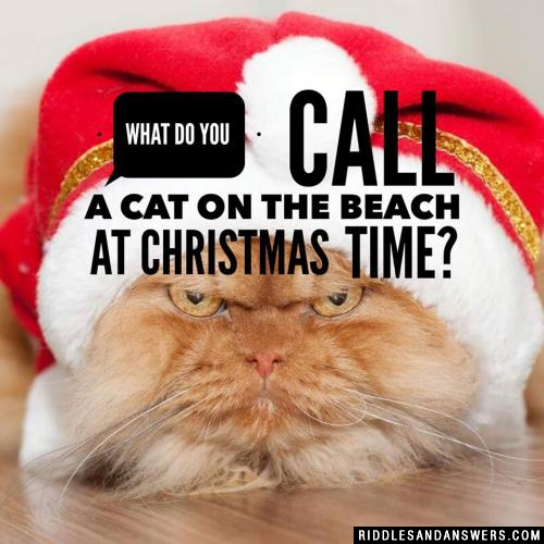 What do you call a cat on the beach at Christmas time?