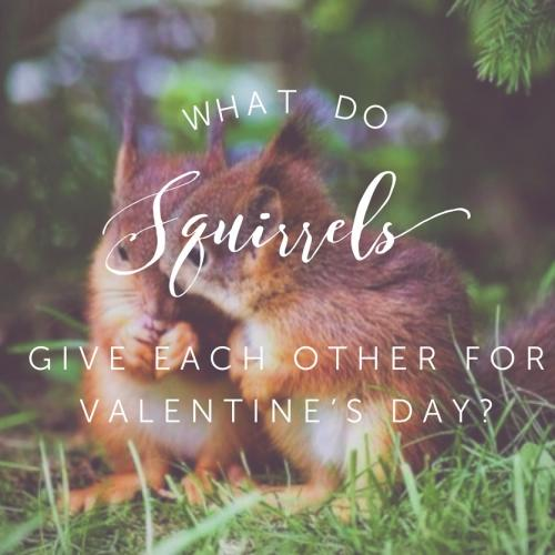 What do squirrels give each other for Valentines Day?