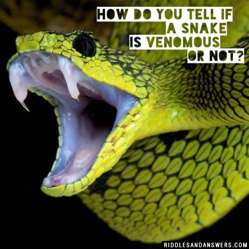 How do you tell if a snake is venomous or not?