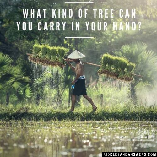 What kind of tree can you carry in your hand?