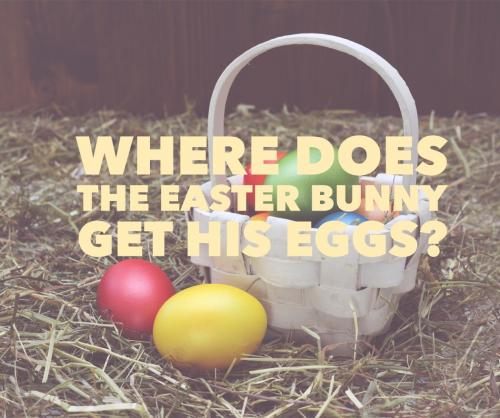 Where does the Easter Bunny get his eggs?