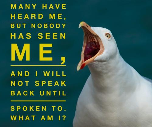 Many have heard me, but nobody has seen me, and I will not speak back until spoken to.What am I?