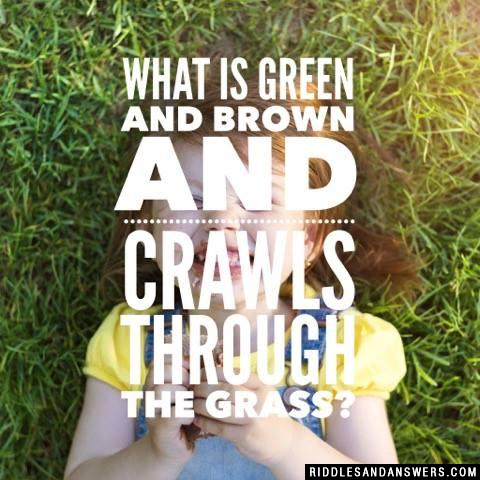 What is green and brown and crawls through the grass?