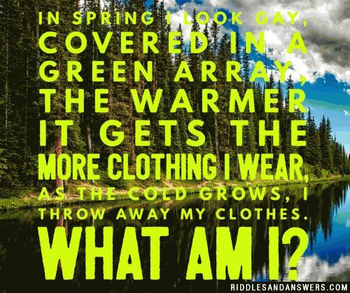 In spring I look gay, Covered in a green array, The warmer it gets the more clothing I wear, As the cold grows, I throw away my clothes.  What am I?