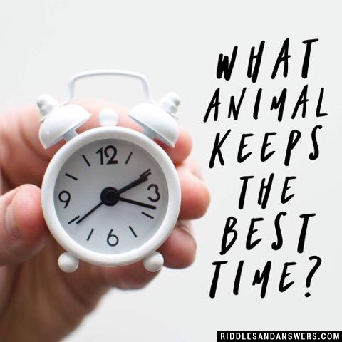 What animal keeps the best time?
