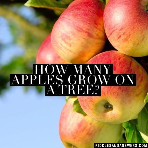 How many apples grow on a tree?