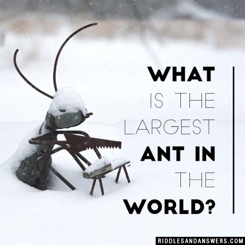 What is the largest ant in the world?