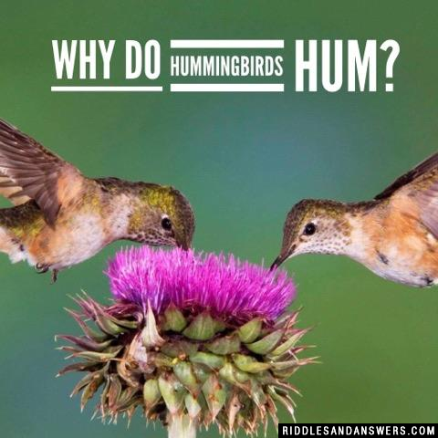 Why do hummingbirds hum?