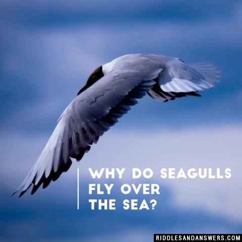 Why do seagulls fly over the sea?